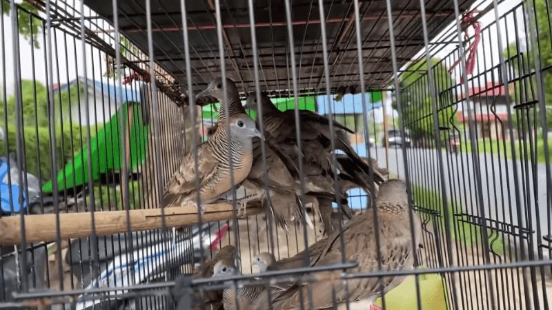 Aksi Bang Evan Borong Semua Burung, Lalu Dilepaskan