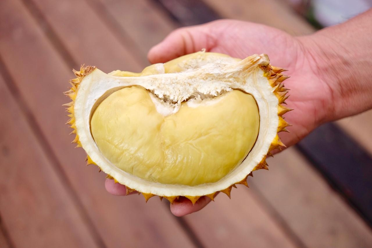 """Surganya Durian """"Kucing Tidur"""" di Jemongko!"""